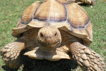 Reptile Round Up Weekend